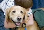 Animal assisted therapy resources